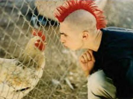 punk Vs chicken