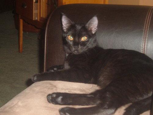My Kitten Meisha