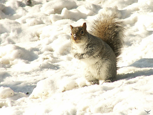 Squirrel - wild-animals Photo