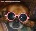 Sweetie - dogs icon