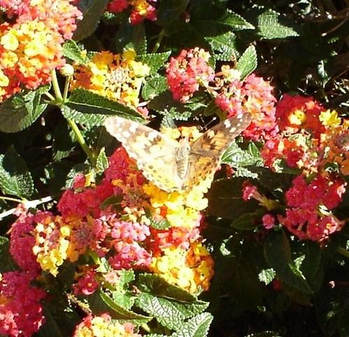 a beautiful con bướm, bướm
