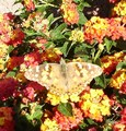 a beautiful butterfly - gardening photo