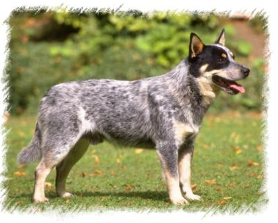 What breed of dog(s) do you have? If you have a mutt please comment
