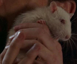 "What's the name of Daniel Faraday's lab rat we see in 4x5 ""The Constant""?"