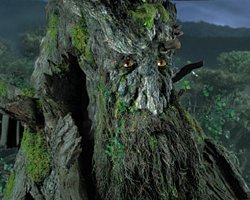 How tall is Treebeard?