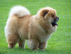 Dog Breed IQ: Identify this fluffy, medium sized dog...