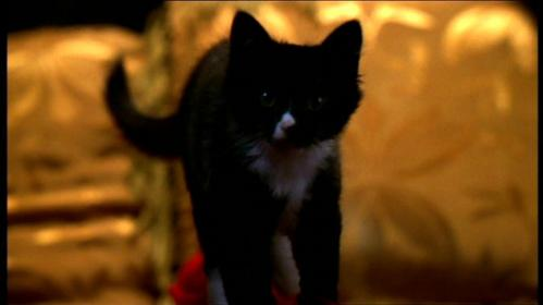 What was the fist name that Tara suggested for the cat she was going to get?
