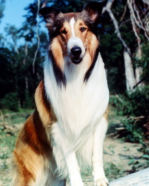 Which of the following are NOT Lassie movies?