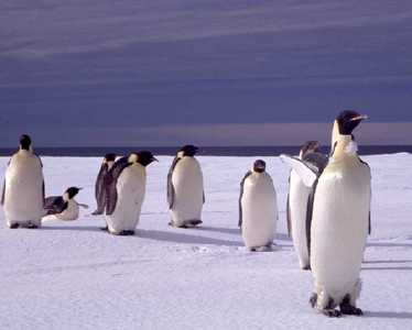 How many penguins are there in the North Pole?
