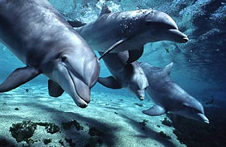 Members of the dolphin family may swim in...