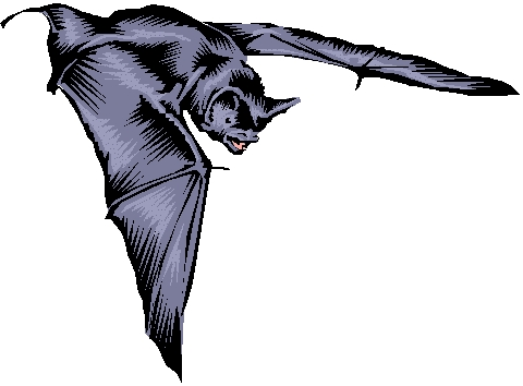 How many different species of bats are there?