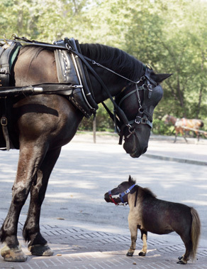 The world's smallest horse (pictured below)is named what?