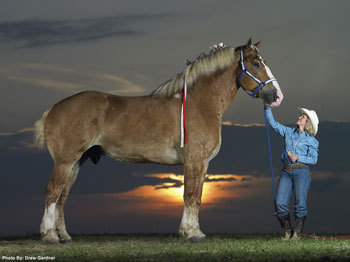 Radar, the worlds tallest horse, is what breed?