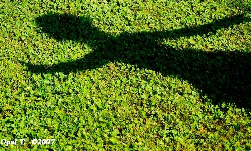 Which alien species masquerades as shadows?