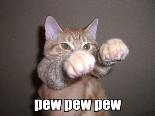 [Image: Funny-Cat-Pictures-cats-935656_500_375.jpg]