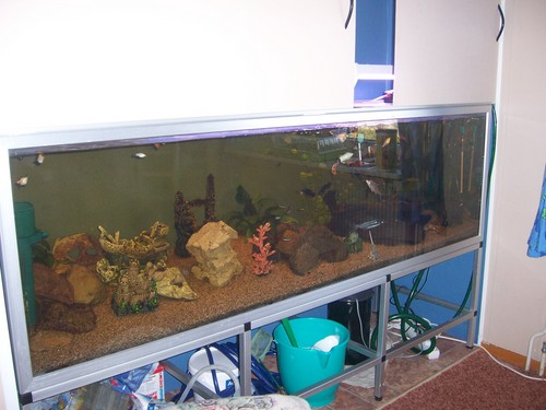 In-wall Aquarium